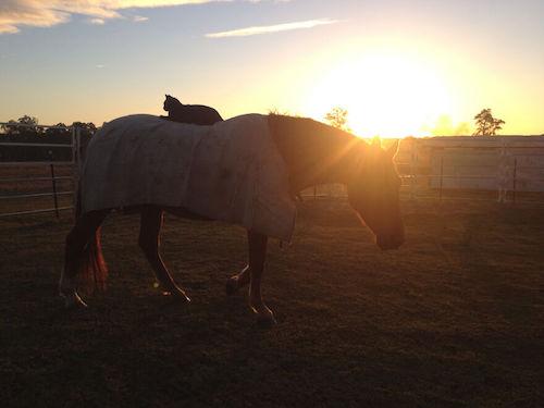 amizade gato e cavalo 11