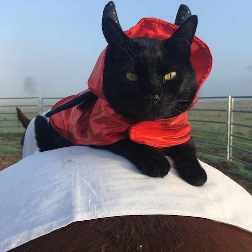 amizade gato e cavalo 12