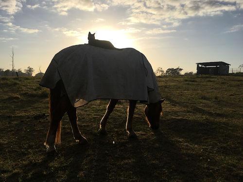 amizade gato e cavalo 2