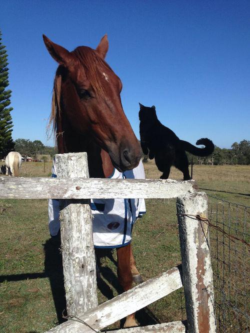 amizade gato e cavalo 4