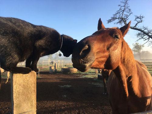 amizade gato e cavalo 5