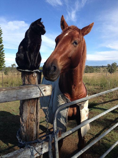 amizade gato e cavalo 9