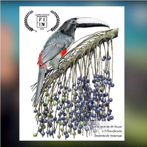Ilustração vence prêmio internacional