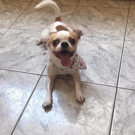 cão Benji é encontrado