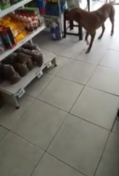 [VÍDEO] Dono de mercadinho deixa cãozinho faminto 'roubar' ração e internautas elogiam atitude 3