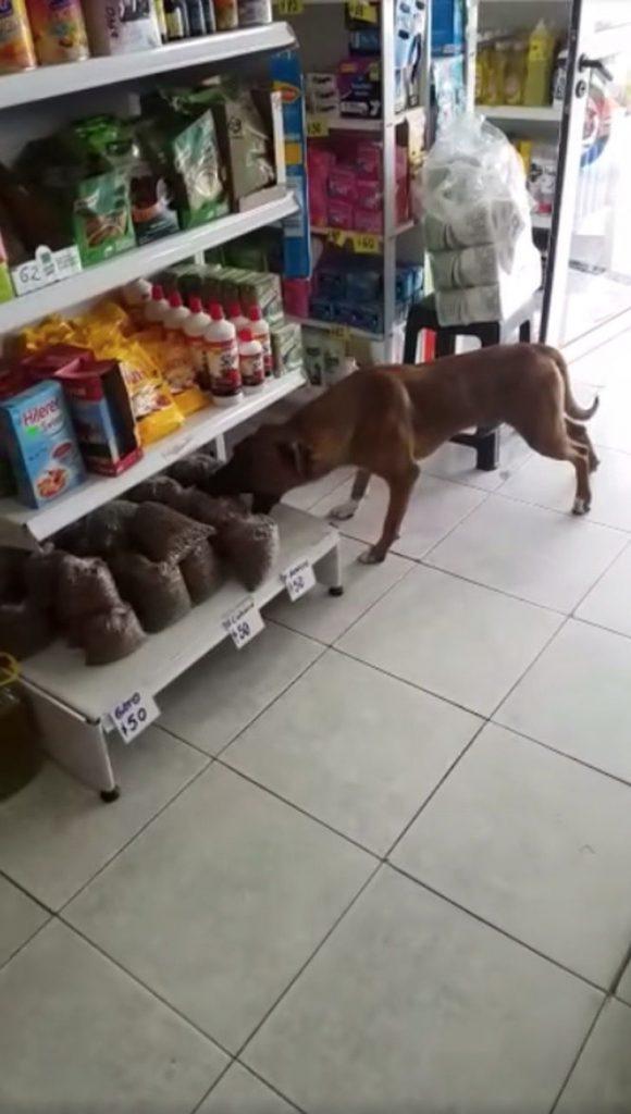 [VÍDEO] Dono de mercadinho deixa cãozinho faminto 'roubar' ração e internautas elogiam atitude 4