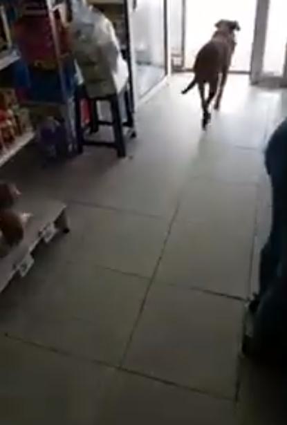[VÍDEO] Dono de mercadinho deixa cãozinho faminto 'roubar' ração e internautas elogiam atitude 5