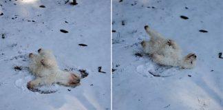 mulher procura neve para cachorro brincar