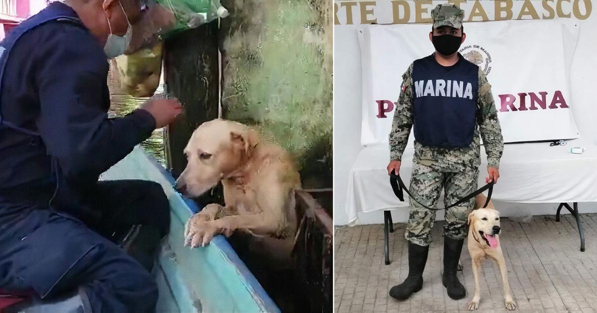 cão resgatado em enchente é adotado pela Marinha