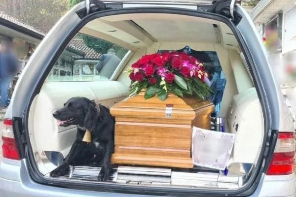 cão acompanha caixão de dono