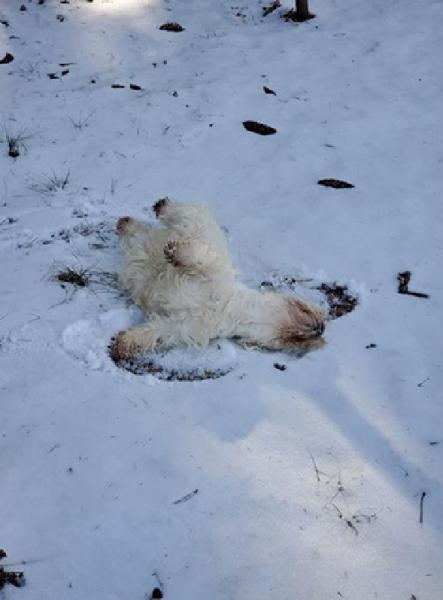 mulher procura neve para seu cão brincar