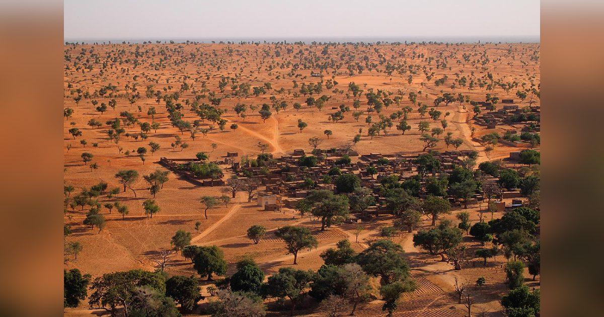 cientistas descobrem floresta no deserto