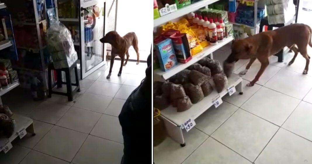 [VÍDEO] Dono de mercadinho deixa cãozinho faminto 'roubar' ração e internautas elogiam atitude 6