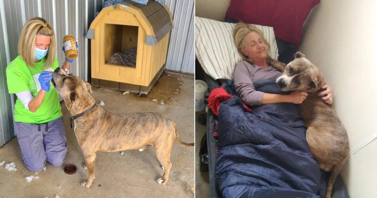 Kacey mudou pra abrigo para ajudar cão a ser adotado