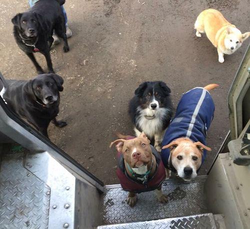 entregador fotos cachorros 4
