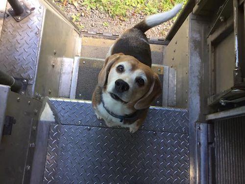 entregador fotos cachorros 6