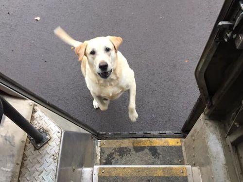 entregador fotos cachorros 8
