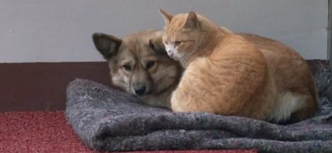 Gatinho abraça e protege cachorro abandonado pela família 4