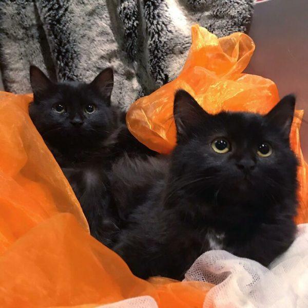 gatinha e seus filhotes