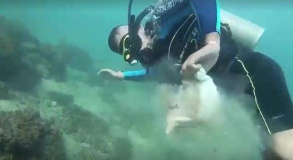 mergulhador paraplégico limpa Mar