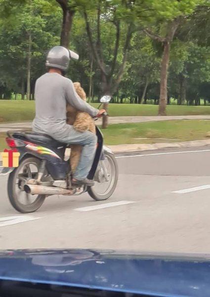 homem com urso na moto