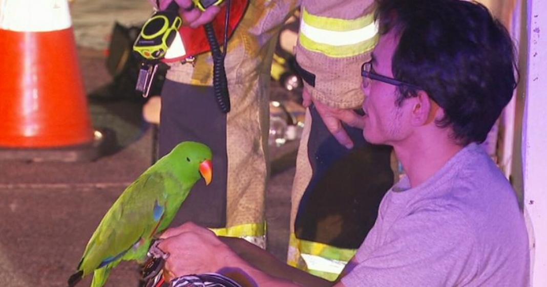 Papagaio salva dono