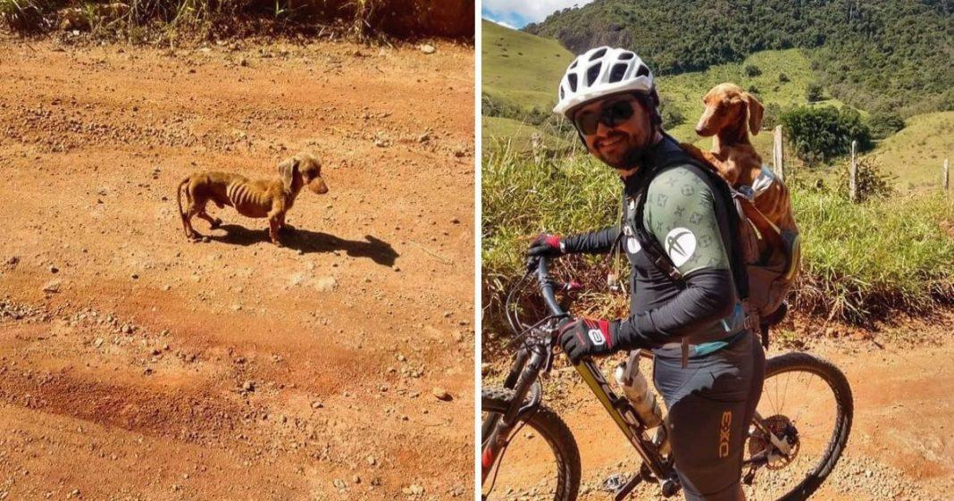 ciclista resgata cachorro