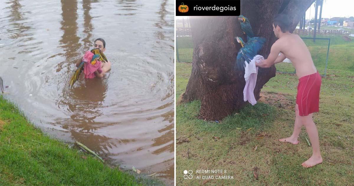 [VÍDEO] Jovem pula em lago e salva araras-azuis que se afogavam, em Rio Verde (GO) 2