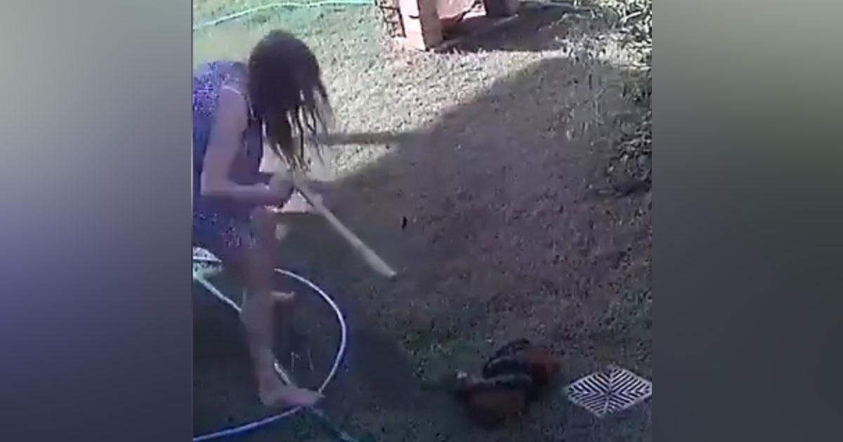 [VÍDEO] Mulher briga com cobra píton para salvar seu cachorro de ataque 1