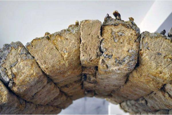 homem cria tijolos de cogumelo