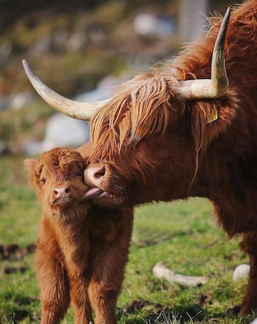 amor materno 13