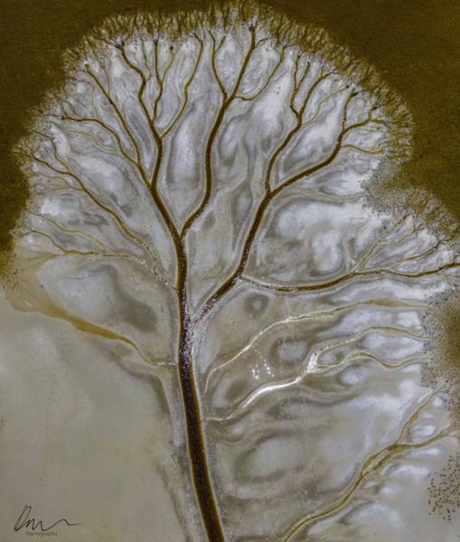 árvore da vida capturada por drone