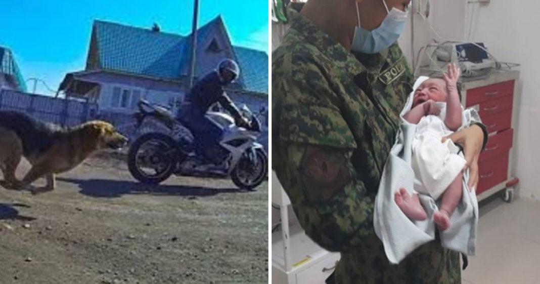 cachorro para motociclista e salva bebê