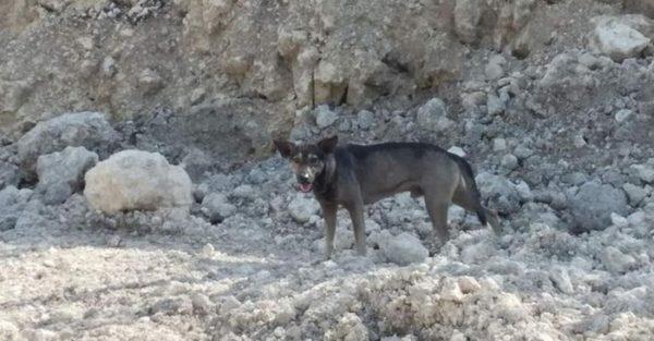O cachorro vive nas redondezas do terreno mencionado, e aprendeu a se virar ali
