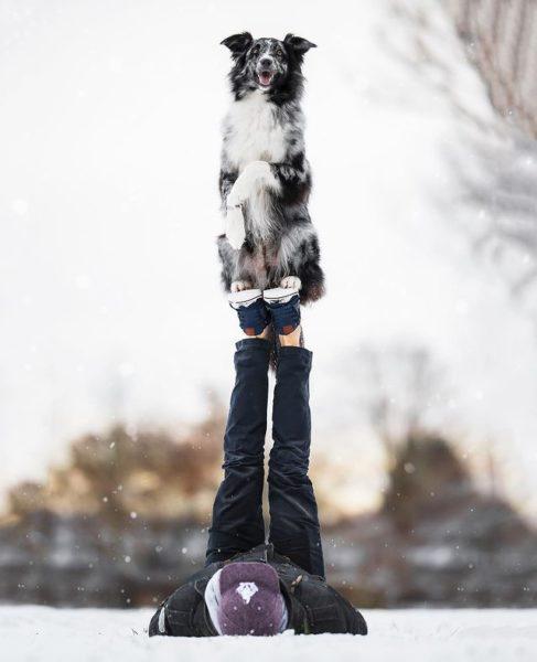 cachorro engana dono