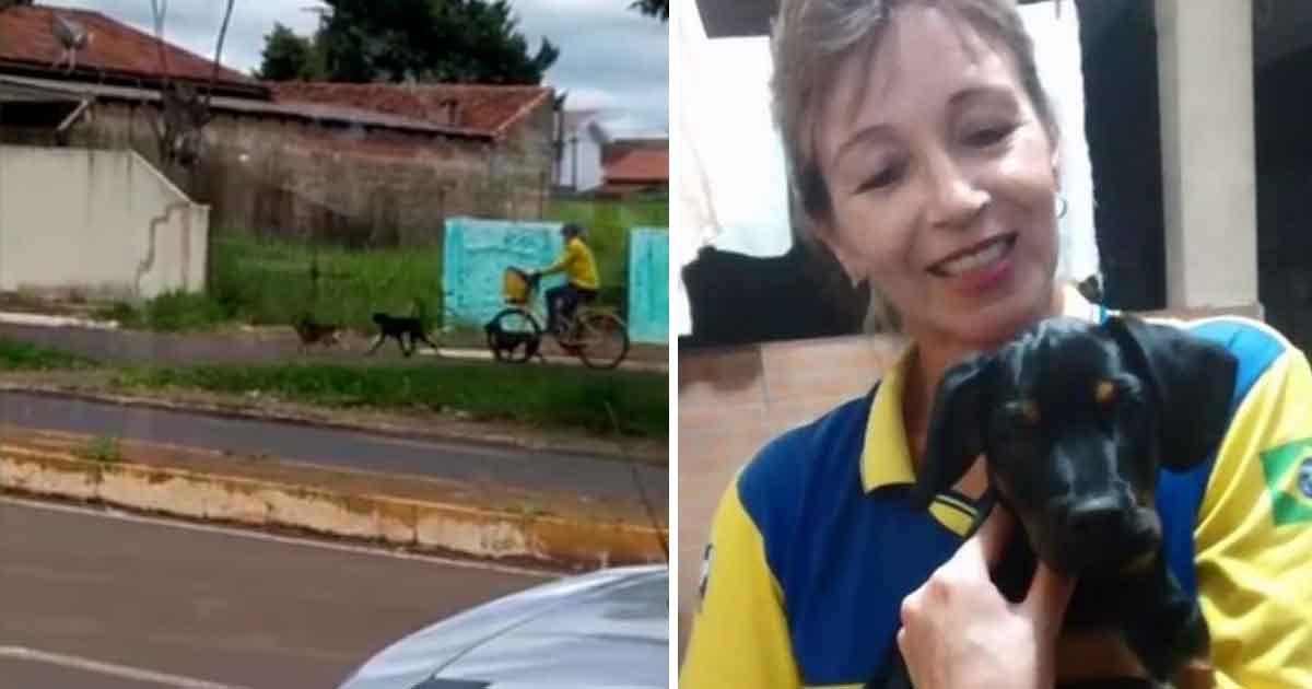 Enquanto trabalha, carteira distribui ração e amor para animais de rua em Campo Mourão (PR) 3