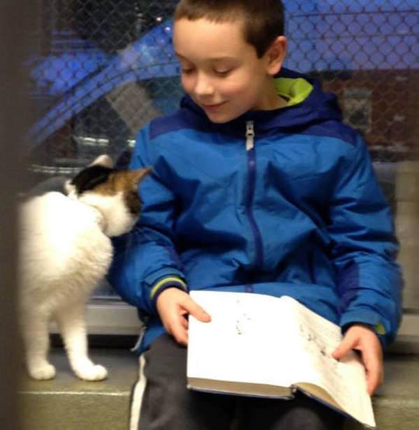 criancas-leem-gatos-abrigo-10