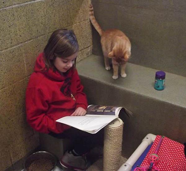 criancas-leem-gatos-abrigo-3