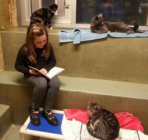 criancas-leem-gatos-abrigo-5