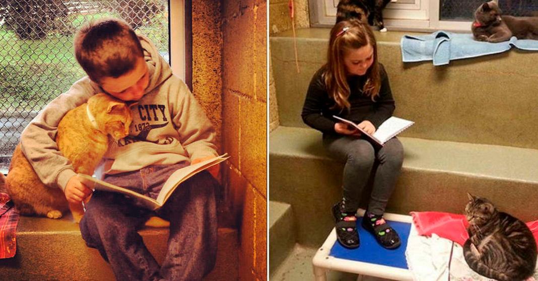 Para incentivar a leitura, abrigo lança programa em que crianças leem para confortar gatos resgatados 2