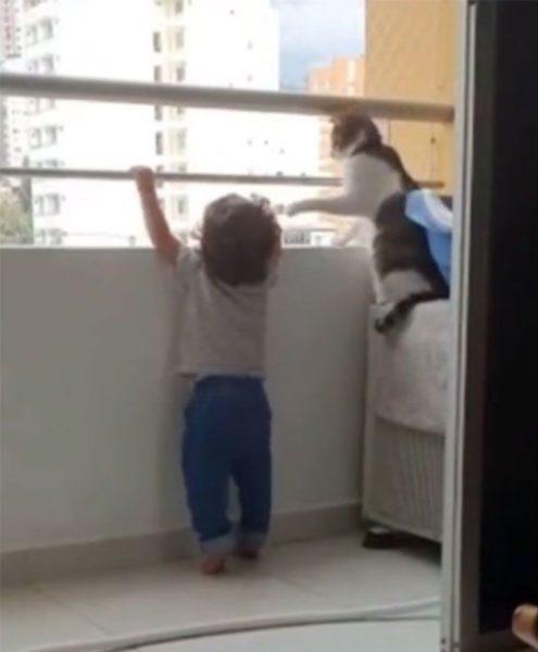 gatinho protege bebê