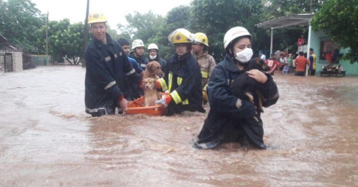 bombeiros salvam cachorros