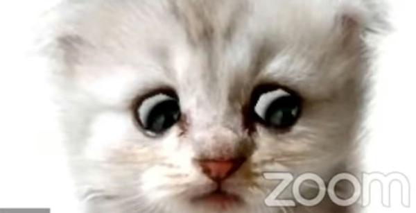 advogado gatinho zoom 1