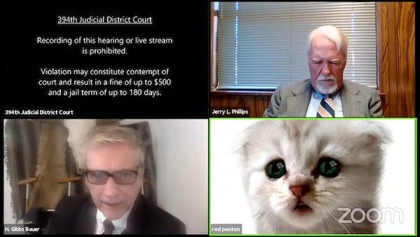 advogado gatinho zoom 2