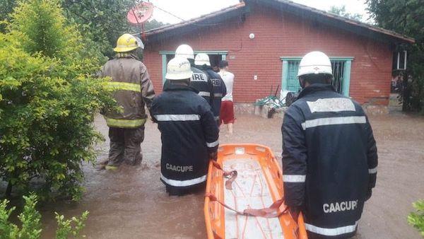 bombeiros salvam cachorros 1