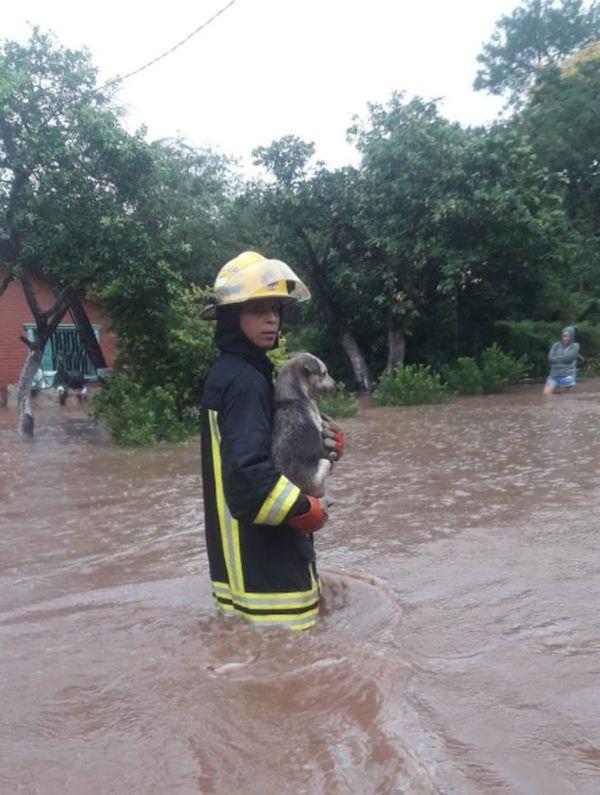 bombeiros salvam cachorros 2