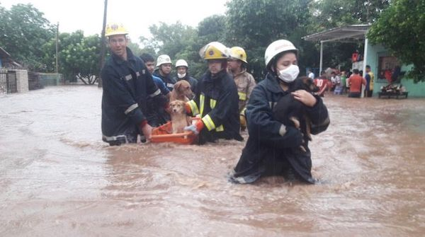 bombeiros salvam cachorros 5