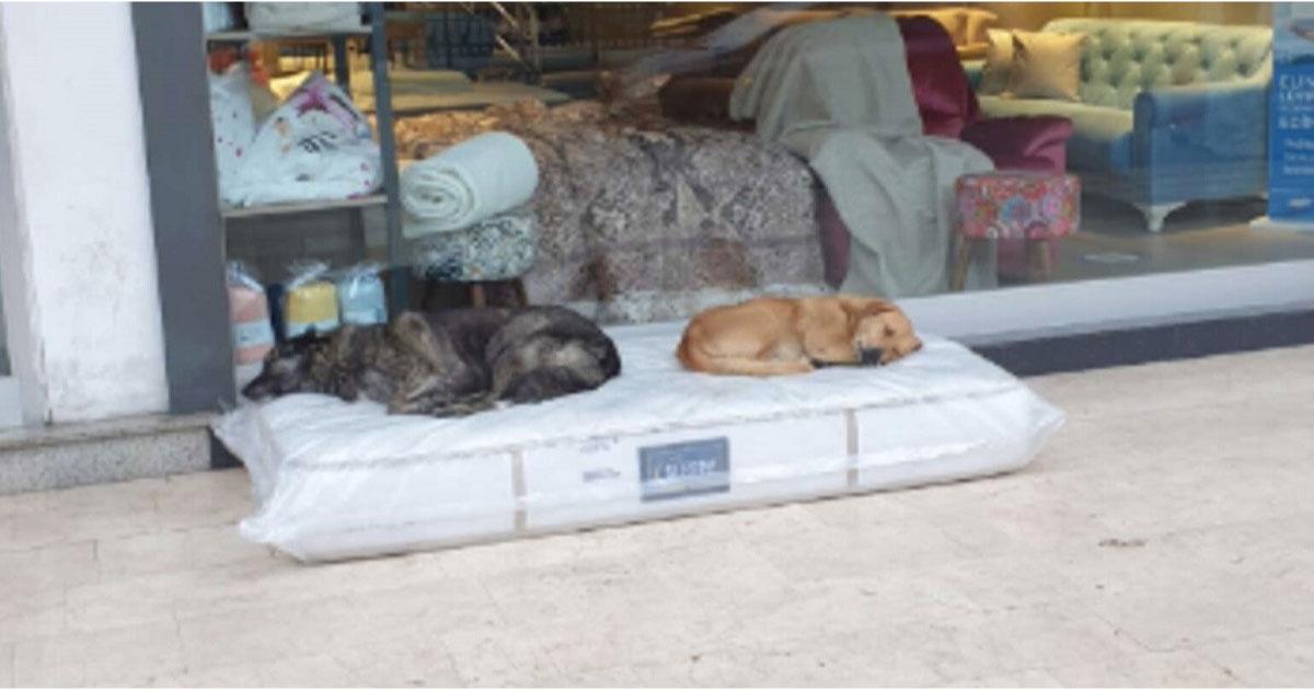 comerciante coloca colchão para cachorro