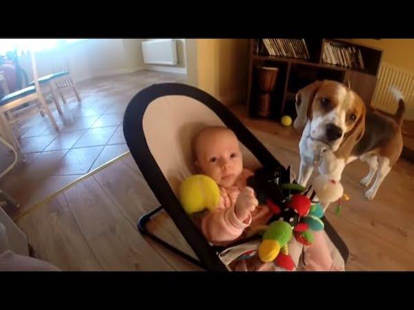 cachorro rouba binquedo bebe 3