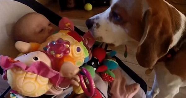 cachorro rouba binquedo bebe 4